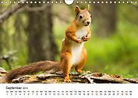Finland's fauna (Wall Calendar 2019 DIN A4 Landscape) - Produktdetailbild 9