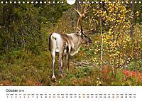 Finland's fauna (Wall Calendar 2019 DIN A4 Landscape) - Produktdetailbild 10