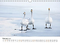 Finland's fauna (Wall Calendar 2019 DIN A4 Landscape) - Produktdetailbild 2