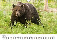 Finland's fauna (Wall Calendar 2019 DIN A4 Landscape) - Produktdetailbild 4