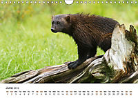 Finland's fauna (Wall Calendar 2019 DIN A4 Landscape) - Produktdetailbild 6