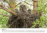 Finland's fauna (Wall Calendar 2019 DIN A4 Landscape) - Produktdetailbild 5