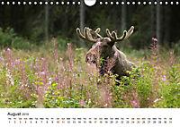 Finland's fauna (Wall Calendar 2019 DIN A4 Landscape) - Produktdetailbild 8
