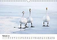 Finnland: eine tierische Entdeckungsreise (Wandkalender 2019 DIN A4 quer) - Produktdetailbild 6