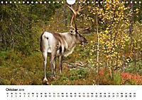 Finnland: eine tierische Entdeckungsreise (Wandkalender 2019 DIN A4 quer) - Produktdetailbild 10