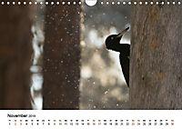 Finnland: eine tierische Entdeckungsreise (Wandkalender 2019 DIN A4 quer) - Produktdetailbild 11