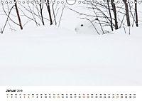 Finnland: eine tierische Entdeckungsreise (Wandkalender 2019 DIN A4 quer) - Produktdetailbild 1