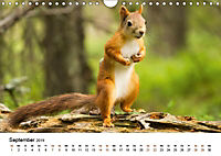 Finnland: eine tierische Entdeckungsreise (Wandkalender 2019 DIN A4 quer) - Produktdetailbild 9