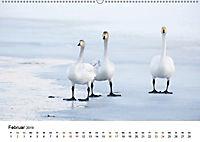 Finnland: eine tierische Entdeckungsreise (Wandkalender 2019 DIN A2 quer) - Produktdetailbild 2