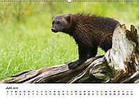 Finnland: eine tierische Entdeckungsreise (Wandkalender 2019 DIN A2 quer) - Produktdetailbild 6