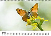 Finnland: eine tierische Entdeckungsreise (Wandkalender 2019 DIN A2 quer) - Produktdetailbild 7