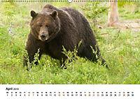 Finnland: eine tierische Entdeckungsreise (Wandkalender 2019 DIN A2 quer) - Produktdetailbild 4