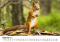 Finnland: eine tierische Entdeckungsreise (Wandkalender 2019 DIN A2 quer) - Produktdetailbild 9