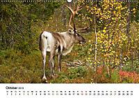 Finnland: eine tierische Entdeckungsreise (Wandkalender 2019 DIN A2 quer) - Produktdetailbild 10