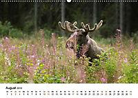 Finnland: eine tierische Entdeckungsreise (Wandkalender 2019 DIN A2 quer) - Produktdetailbild 8