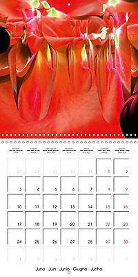 Fireworks In Red (Wall Calendar 2019 300 × 300 mm Square) - Produktdetailbild 6