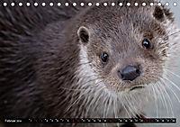 Fischotter, flinke Jäger (Tischkalender 2019 DIN A5 quer) - Produktdetailbild 2
