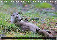 Fischotter, flinke Jäger (Tischkalender 2019 DIN A5 quer) - Produktdetailbild 6