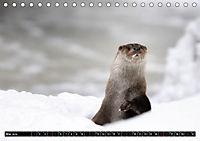 Fischotter, flinke Jäger (Tischkalender 2019 DIN A5 quer) - Produktdetailbild 5
