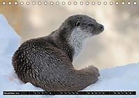 Fischotter, flinke Jäger (Tischkalender 2019 DIN A5 quer) - Produktdetailbild 11