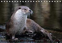 Fischotter, flinke Jäger (Tischkalender 2019 DIN A5 quer) - Produktdetailbild 9