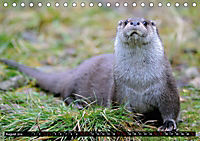 Fischotter, flinke Jäger (Tischkalender 2019 DIN A5 quer) - Produktdetailbild 8