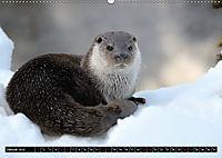 Fischotter, flinke Jäger (Wandkalender 2019 DIN A2 quer) - Produktdetailbild 1