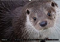 Fischotter, flinke Jäger (Wandkalender 2019 DIN A2 quer) - Produktdetailbild 2