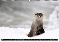 Fischotter, flinke Jäger (Wandkalender 2019 DIN A2 quer) - Produktdetailbild 5