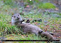 Fischotter, flinke Jäger (Wandkalender 2019 DIN A2 quer) - Produktdetailbild 6