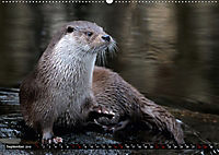 Fischotter, flinke Jäger (Wandkalender 2019 DIN A2 quer) - Produktdetailbild 9
