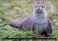 Fischotter, flinke Jäger (Wandkalender 2019 DIN A2 quer) - Produktdetailbild 8