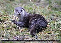 Fischotter, flinke Jäger (Wandkalender 2019 DIN A2 quer) - Produktdetailbild 7