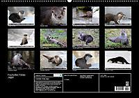 Fischotter, flinke Jäger (Wandkalender 2019 DIN A2 quer) - Produktdetailbild 13