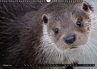 Fischotter, flinke Jäger (Wandkalender 2019 DIN A3 quer) - Produktdetailbild 2