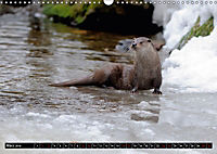 Fischotter, flinke Jäger (Wandkalender 2019 DIN A3 quer) - Produktdetailbild 3