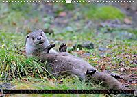 Fischotter, flinke Jäger (Wandkalender 2019 DIN A3 quer) - Produktdetailbild 6