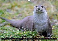 Fischotter, flinke Jäger (Wandkalender 2019 DIN A3 quer) - Produktdetailbild 8