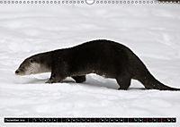 Fischotter, flinke Jäger (Wandkalender 2019 DIN A3 quer) - Produktdetailbild 12