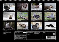 Fischotter, flinke Jäger (Wandkalender 2019 DIN A3 quer) - Produktdetailbild 13