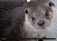 Fischotter, flinke Jäger (Wandkalender 2019 DIN A4 quer) - Produktdetailbild 2