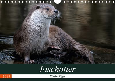 Fischotter, flinke Jäger (Wandkalender 2019 DIN A4 quer), J. R. Bogner
