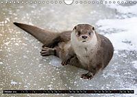 Fischotter, flinke Jäger (Wandkalender 2019 DIN A4 quer) - Produktdetailbild 10