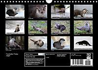 Fischotter, flinke Jäger (Wandkalender 2019 DIN A4 quer) - Produktdetailbild 13