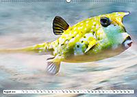 Fischwelt - Artwork (Wandkalender 2019 DIN A2 quer) - Produktdetailbild 8