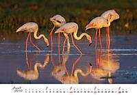 Flamingos 2019 - Produktdetailbild 4