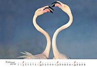 Flamingos 2019 - Produktdetailbild 2