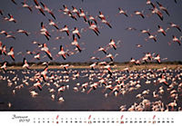 Flamingos 2019 - Produktdetailbild 1