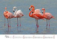 Flamingos 2019 - Produktdetailbild 3