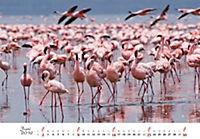 Flamingos 2019 - Produktdetailbild 6